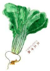なにわの伝統野菜 天王寺蕪(てんのうじかぶら)