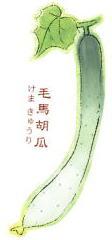 なにわの伝統野菜 毛馬胡瓜(けまきゅうり)